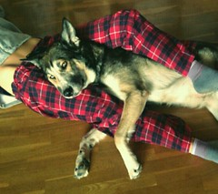 Daily naps (clarapuigmarti) Tags: winter woman dog cute girl beautiful fashion evening amazing cool husky wolf pretty december nap sweet gorgeous awesome hipster indie stunning siesta hippie boho gypsy pajamas bohemian