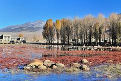 桑堆 紅藻濕地 (愚夫.chan) Tags: china sichuan 2014 四川 桑堆 甘孜藏族自治州 生態名俗田園 紅藻濕地