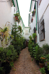 Patio andaluz (Sara C.M) Tags: city flowers decorations espaa plants tourism colors facade andaluca spain plantas colours balcony ciudad colores patio andalusia crdoba turismo balcn andalusian macetas flowerpots decoracin canoneos550d dachada efs1855mmisii
