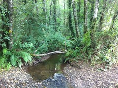 Verde de Galicia.- (ancama_99(toni)) Tags: espaa forest way spain camino country galicia galiza bosque campo caminodesantiago theway 2015
