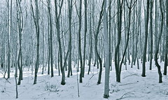 Winterwald - winter forest (Robert Lesti) Tags: schnee winter forest nikon wald bume baum winterwald d700