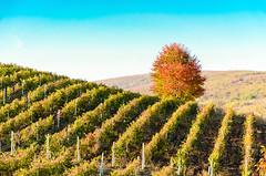 image-1-5 (cosovan.vadim) Tags: fall field landscape nikon d5100 18140mm