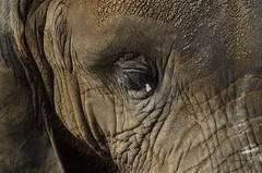 Up close (Voice_from_within) Tags: elephant zoo lahore nikond5100