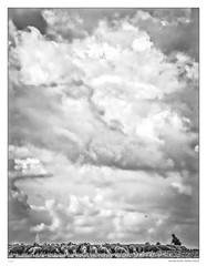 Shepherds sky (sdc_foto) Tags: sky blackandwhite bw clouds germany open sheep shepherd wide 2007 hesse giesen pentaxk10d pentaxart sdcfoto