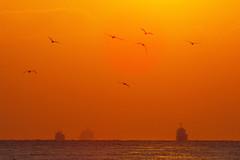 Far Away (halfrain) Tags: park sunset sea sky bird japan boat ship seagull horizon sigma 300mm  teleconverter merrill foveon    sd1  20x 600mm   120300mm sigma120300mm sigma120300mmf28 tc2xex sigma12030028  sd1merrill fovclassicblue