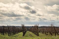 Vignes sur les hauts de Saumur ([ Vincent Leroux Photo ]) Tags: sky panorama cloud france river landscape vineyard view ciel valley nuage loire vignoble arbre glise chteau vue vigne vienne fleuve crue saumur valle rgion anjou paysdeloire castlle