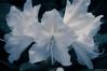 Blue Dawn (ralf.kerkhoff) Tags: natur blumen eremitage botanik mariaveen reken