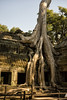Ta Prohm - Photo #1 (doug-craig) Tags: cambodia buddhism angkorwat countries temples taprohm nationalparks hindu nationaltreasures