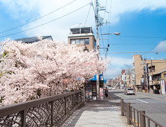 A Day In Kyoto (nasusaka) Tags: street japan cherry spring kyoto fuji 28mm blossoms story 京都 april 桜 日本 rap 18mm astia 春 櫻 skura 四月物語 小春日和 日本國