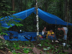 Camp in the Dark Dense Jungle