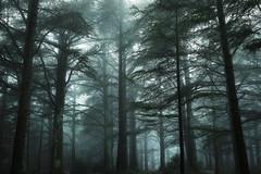 A Certain Shades of Green (DBPhotographe) Tags: david france nature montagne pin pluie db paca arbres lee provence filters nuages paysage luberon mont froid brouillard forêt mystique brume sud mousse tronc vaucluse ambiance massif randonnée méditerranée humide filtres cèdres provençal dramatique bouscarle