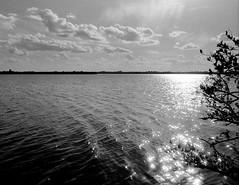 una passeggiata sull'acqua (littletinperson) Tags: friends light blackandwhite bw film home water monochrome 28mm ilfordhp5 ilford impression 28mmf18 hp5plus nikonf4 wabasso littletinperson