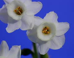MGM014574-R-E-C (Mario Giner) Tags: flores macro canon mario 100mm 5d alcoy alcoi afa markiii