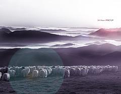 Pastando al amanecer (Jabi Artaraz) Tags: light luz sol valle amanecer pasto zb niebla montañas bruma gorbea ovejas rebaño egunsentia eguzkia resplandor euskoflickr nieblabaja jartaraz