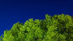 DSC05465 (regis.verger) Tags: temple zen nuit parc nocturne asiatique vgtal maulvrier