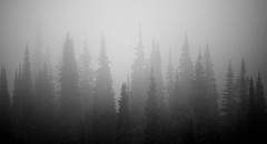 The fog comes  on little cat feet.   It sits looking  over harbor and city  on silent haunches  and then moves on. Carl  Sandburg (GWP_Photo) Tags: trees cloud mist canada fog forest nikon mood britishcolumbia d750 nikkor sunpeaks 70300