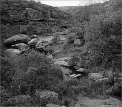 2016-05-09  Kodak 400TX in D76 20C 6,5 min   1 003-02web (Yuriy Sanin) Tags: ukraine yuriy iskra blackandwhite bushes stones rocks river stream canyon sanin 6x6            arbuzinskiy