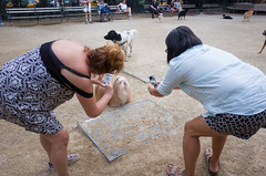 washington square park dog run (Charley Lhasa) Tags: ricohgrii grii 183mm 28mm35mmequivalent iso400 secatf28 0ev aperturepriority pattern noflash r008163 dng uncropped taken160716193523 uploaded160723011436 5stars flagged adobelightroomcc20156 lightroomcc20156 adobelightroom lightroom charley charleylhasa lhasaapso dog dogs photographer photographers washingtonsquareparkdogrun dogrun bigdogrun washingtonsquarepark wsp nycparks citypark urbanpark greenwichvillage manhattan newyorkcity nyc newyork ny tumblr160722 myfavorites moo moocd buscd httpstmblrcozpjiby29hzveo