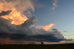 Nuvens ao entardecer (marcusviniciusdelimaoliveira) Tags: tree field rain clouds chuva cu prdosol nuvens campo arvore nuvem entardecer