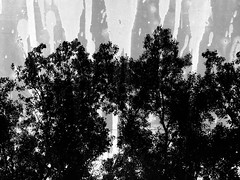 (Rossdxvx) Tags: trees abstract art texture nature silhouette skyline dark experimental noir shadows decay michigan surrealism surreal overlay textures overexposed minimalism decaying textured 2016