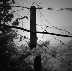 Broken Fence II (ericgrhs) Tags: zaun fence barbedwire stacheldraht broken zerbrochen pfosten post pole