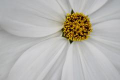 Flowers From Luss C (Donjovi2012) Tags: flowers luss scotland