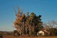 (emiliokuffer) Tags: nikon nikond610 landscape paisaje sunset atardecer horizon horizonte clear day campo countryside