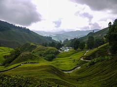 Tea Plantation, Cameron Highlands, Malaysia. (lou.martindale) Tags: teaplantation cameronhighlands malaysia