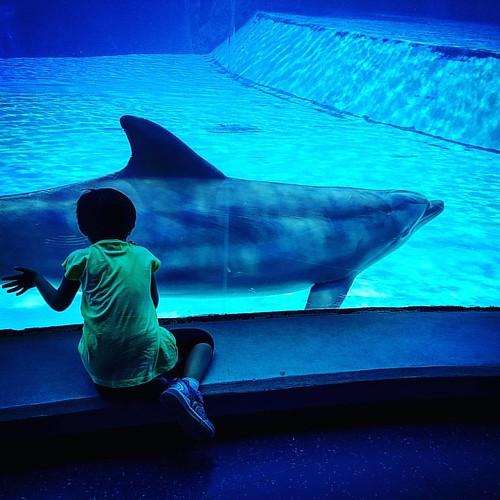 Lasciati accarezzare ...  #alexandra #dolphin #erressephoto #oltremare #riccione #spettacolo #natura #delfini  #vacanze #spiaggia #giochi  #divertimento #ferie #felicità #senzasosta #riccione