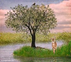 Morning Glory ... (rubyblossom.) Tags: wpc week513 deer tree grass morning rubyblossom rubystreasures 2016