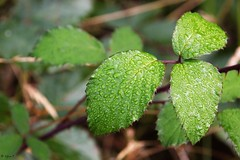 Morgentau (pic it) Tags: morgentau morning dew bltter leaves green forest wald lichtung meadow