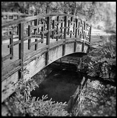 Parc de la Tte d'Or,le  pont japonais. (LUDOVIC. R) Tags: parc de la tte dor 19mm 28 sigma carr 1x1 noir et blanc noiretblanc