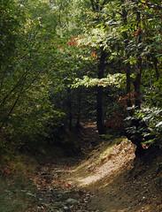 Into the woods (paolo75photo) Tags: bosco sentiero luce