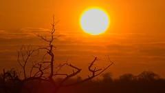 Sunrise, Djuma Private Game Reserve