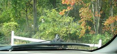 WATCH OUT FOR THE DEAD (richie 59) Tags: ulstercountyny ulstercounty newyorkstate newyork unitedstates sunday weekend autumn trees townofesopusny townofesopus richie59 outside fall ulsterparkny ulsterpark 2016 oct2016 oct162016 countyroad america 2010s 2lane twolane hudsonvalley midhudsonvalley midhudson nystate nys ny usa us halloweendecoration decoration frontyard yard fence whitefence woodenfence creepy wierd scary