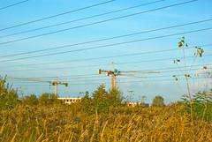 Autum 2016 - 65 (Hejma (+/- 5400 faves and 1,7 milion views)) Tags: thebeginningofautumn constructioncranes polish flora grass yellow green chiaroscuro