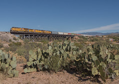 Token Train Photo - Arizona Edition (Night Stalker Photo Works, LLC.) Tags: yellowborg unionpacific manifest cienegacreek et44ac cacti historicsite desertrailroading