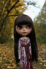Luzia in the woods.❤️❤️❤️❤️❤️❤️❤️❤️❤️❤️❤️Luzia en el bosque.