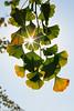 _MG_6834 (Luigi Consiglio) Tags: colore natura giallo aurora nebbia albero autunno rosso paesaggi paesaggio bosco ambiente esterno foresta faggio hornbeam nessuno vegetazione quercia tranquillità protezione cambiamento orizzontale riservanaturale lucesolare sentierodicampagna bellezzanaturale deciduo
