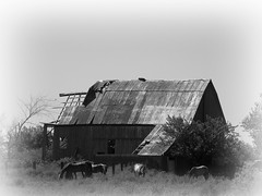 Missouri Farm (Adventurer Dustin Holmes) Tags: horses blackandwhite bw barn rural blackwhite farm country missouri farms ozarks oldbarn