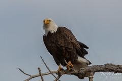 The eagle eye keeps watch