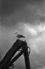 (Michael Polonski) Tags: original sea bw film monochrome clouds analog port 35mm vintage mono scotland blackwhite pentax harbour seagull gull retro analogue schwarzweiss mallaig filmfilmforever