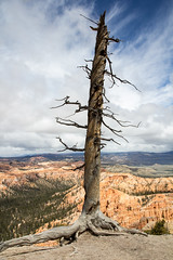 IMG_4353 (techrep33) Tags: beautiful utah nationalpark canyon bryce zion brycecanyon sedimentaryrocks claronfromation