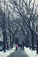 New York (emenamunoz) Tags: park city winter snow newyork nature brooklyn canon square photography photoshoot natural manhattan bigapple nuevayork eeuu