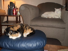 Autumn and Mystic (universalcatfanatic) Tags: blue autumn two cats coffee lamp up relax grey living chair room gray relaxing couch remote curled mystic remotes lay footstool laying endtable