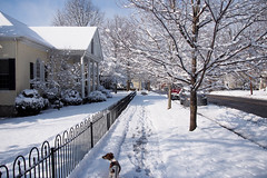 Out for a walk (TonyDPhoto) Tags: winter dog snow kentucky olympus versailles jackrussell 1442 morganstreet epl5 tonydphoto