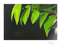 The Green and the Black (heritagefutures) Tags: camera nikon antique f45 simulator nikonf 135mm d800 m39 hellor hermagis 184904 4668mm meikenaf 20mmdg