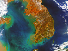 Korea in a Sea of Phytoplankton 1 (sjrankin) Tags: china aqua edited korea nasa noaa usgs eddies 250m seaofjapan yellowsea koreanpeninsula 28february2015