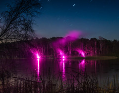 Wald in Violett - Pink forrest02 (Steppenwolf33) Tags: pink lake berlin reflections deutschland see forrest illumination wald beleuchtung reflexionen violett steppenwolf33