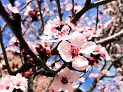 Spring (!efatima) Tags: